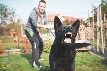 personal injury lawyers, dog bite lawyers, dog bite lawsuits , dog bite victim, dog bite verdict